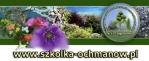 SZKÓ£KA DRZEWEK oferuje: drzewka owocowe, ozdobne, krzewy iglaste, li¶ciaste.!